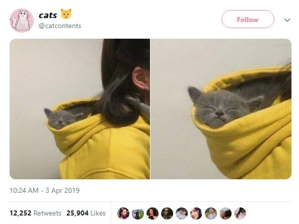 Yellow - cats Follow @catcontents 10:24 AM 3 Apr 2019 12,252 Retweets 25,904 Likes