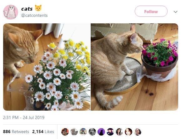Cat - cats Follow @catcontents 2:31 PM 24 Jul 2019 886 Retweets 2,154 Likes