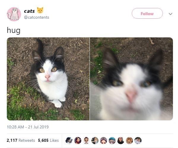 Cat - cats Follow @catcontents hug 10:28 AM 21 Jul 2019 2,117 Retweets 5,605 Likes