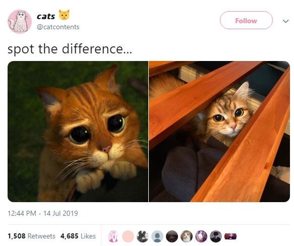 Cat - cats Follow @catcontents spot the difference... 12:44 PM 14 Jul 2019 1,508 Retweets 4,685 Likes