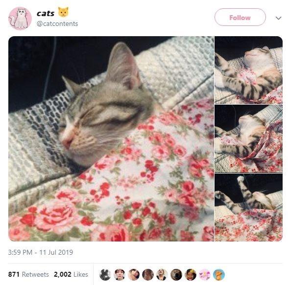 Cat - cats Follow @catcontents 3:59 PM 11 Jul 2019 871 Retweets 2,002 Likes MOPE