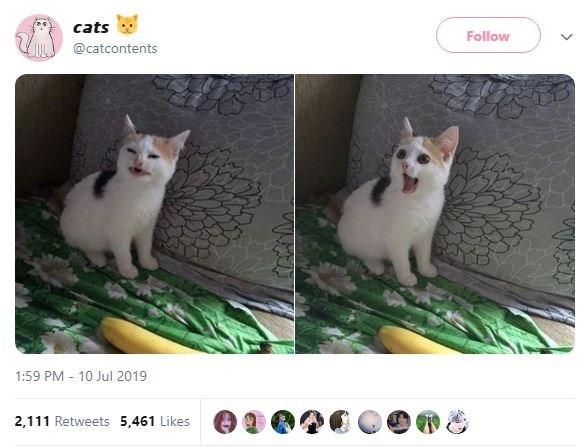 Cat - cats Follow @catcontents 1:59 PM 10 Jul 2019 2,111 Retweets 5,461 Likes