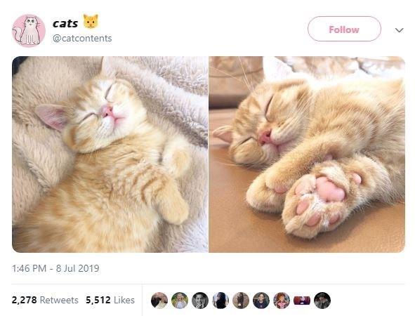 Cat - cats Follow @catcontents 1:46 PM 8 Jul 2019 2,278 Retweets 5,512 Likes