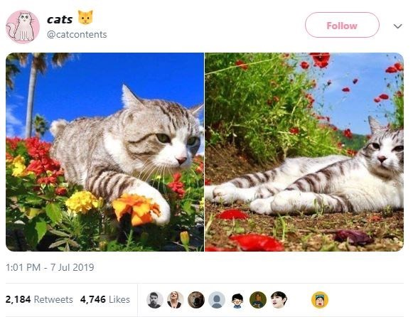 Cat - cats Follow @catcontents 1:01 PM 7 Jul 2019 2,184 Retweets 4,746 Likes
