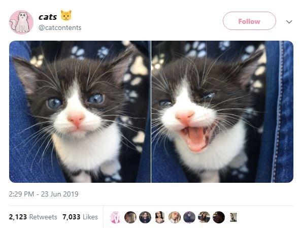 Cat - cats Follow @catcontents 2:29 PM 23 Jun 2019 2,123 Retweets 7,033 Likes