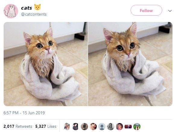 Cat - cats Follow @catcontents 6:57 PM 15 Jun 2019 2,017 Retweets 5,327 Likes