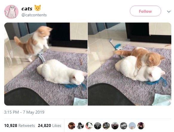 Companion dog - cats Follow @catcontents 3:15 PM 7 May 2019 10,928 Retweets 24,820 Likes