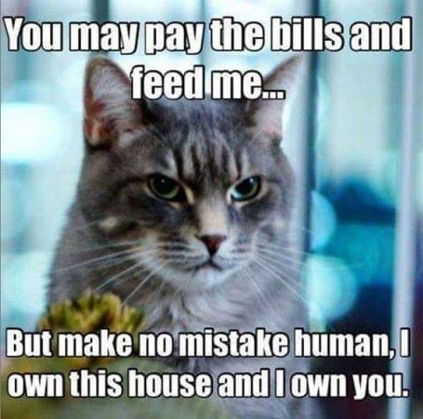 Cat - You may pay the bills and feed me. But make no mistake human, Own this house and lown you.