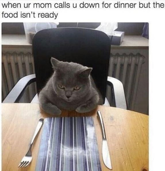Cat - when ur mom calls u down for dinner but the food isn't ready