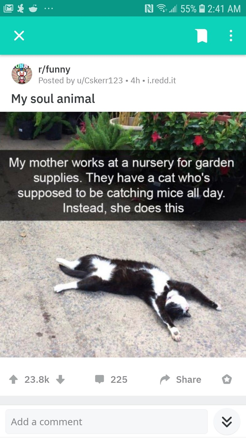 Adaptation - 55% 2:41 AM r/funny Posted by u/Cskerr123. 4h i.redd.it My soul animal My mother works at a nursery for garden supplies. They have a cat who's supposed to be catching mice all day. Instead, she does this 23.8k Share 225 Add a comment >>