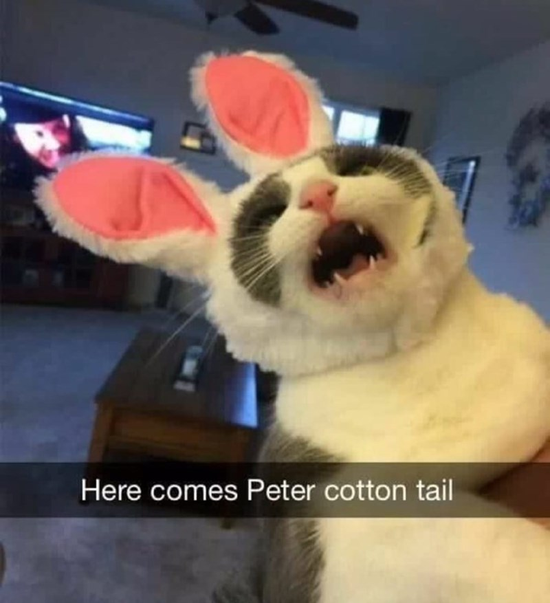 Cat - Here comes Peter cotton tail