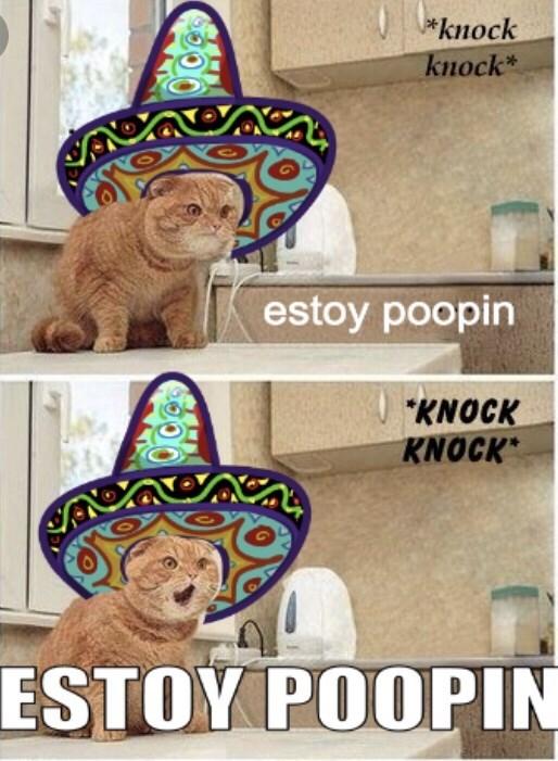 Cat - (*knock knock* estoy poopin KNOCK KNOCK CARSOUANAL ESTOY POOPIN