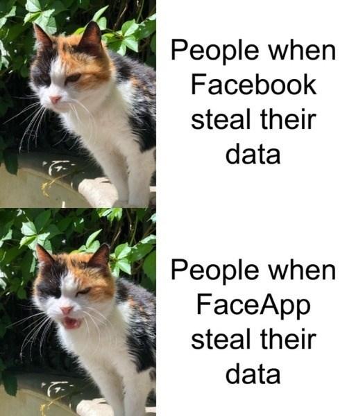 cat memes - 9337007616