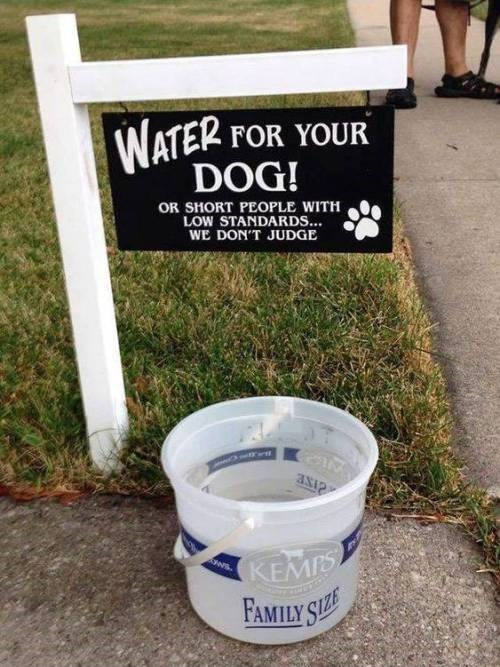 water short people funny funny signs dogs hydration - 9337008128