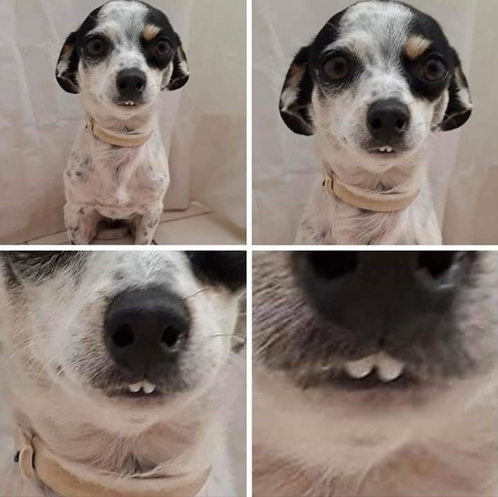 cute dog with an overbite