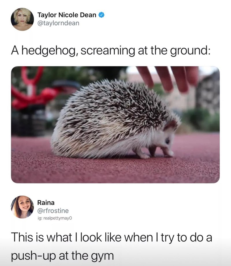 Hedgehog - Taylor Nicole Dean @taylorndean A hedgehog, screaming at the ground: Raina @rfrostine ig: realpettymayO This is what I look like when I try to do a push-up at the gym