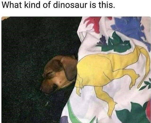Dog - What kind of dinosaur is this
