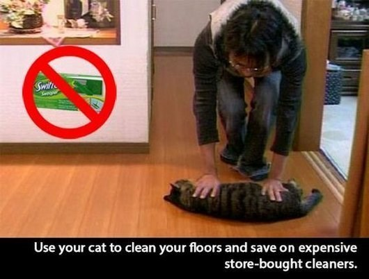 Floor - Switt Use your cat to clean your floors and save on expensive store-bought cleaners.