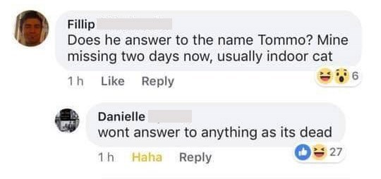 "Facebook - ""Does he answer to the name Tommo? Mine missing two days now, usually indoor cat; wont answer to anything as its dead"""