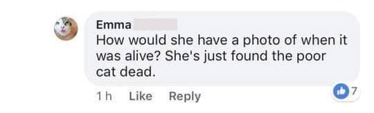 "Facebook - ""How would she have a photo of when it was alive? She's just found the poor cat dead"""