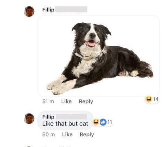 Dog - Fillip 14 51 m Like Reply Fillip Like that but cat 11 Reply 50 m Like