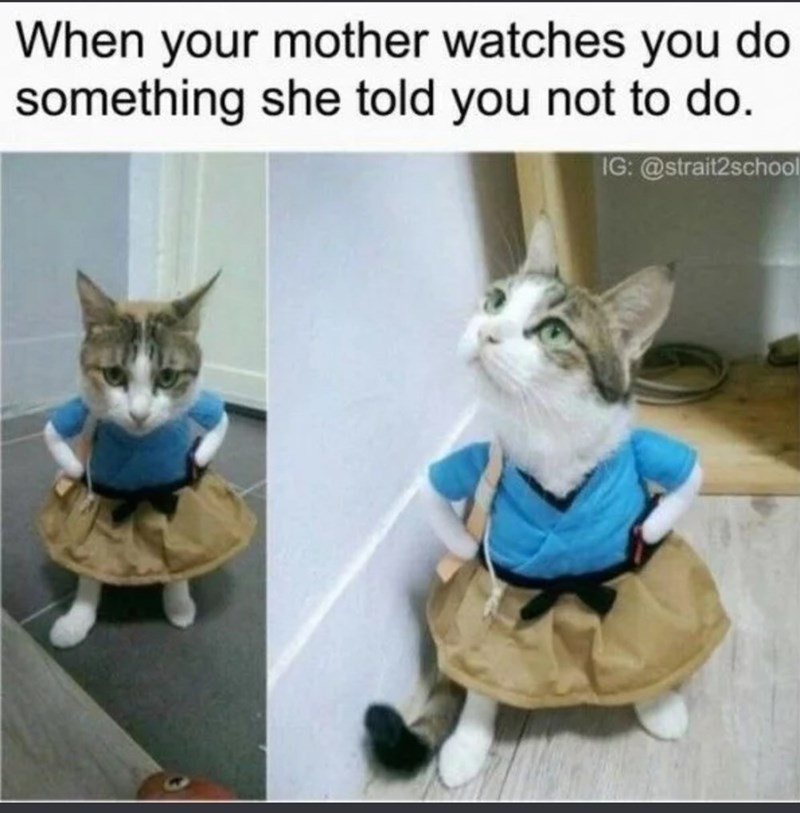 Cat - When your mother watches you do something she told you not to do. IG: @strait2school