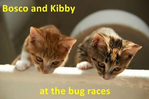 two kittens leaning over a ledge as if they're watching a race