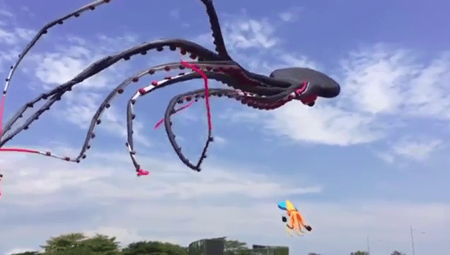 top 12 most interesting gifs of the week