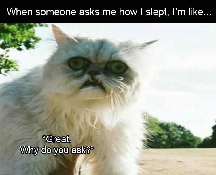 "Meme - ""When someone asks me how I slept, I'm like... 'Great Why do you ask?'"""