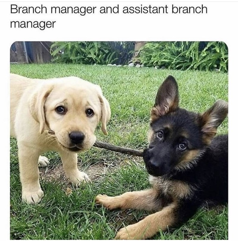 Dog - Branch manager and assistant branch manager