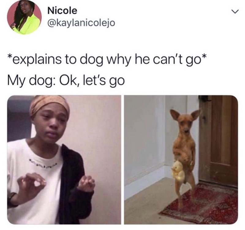"Meme - ""*explains to dog why he can't go* My dog: Ok, let's go"""