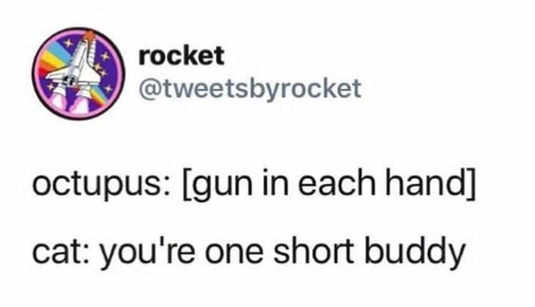 meme - Text - rocket @tweetsbyrocket octupus: [gun in each hand] cat: you're one short buddy