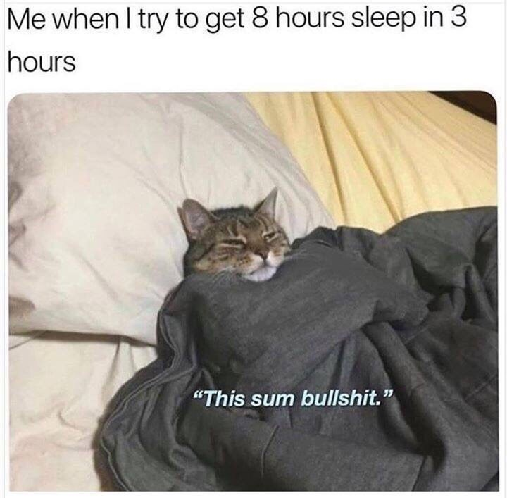 "Cat - Me when I try to get 8 hours sleep in 3 hours ""This sum bullshit."""