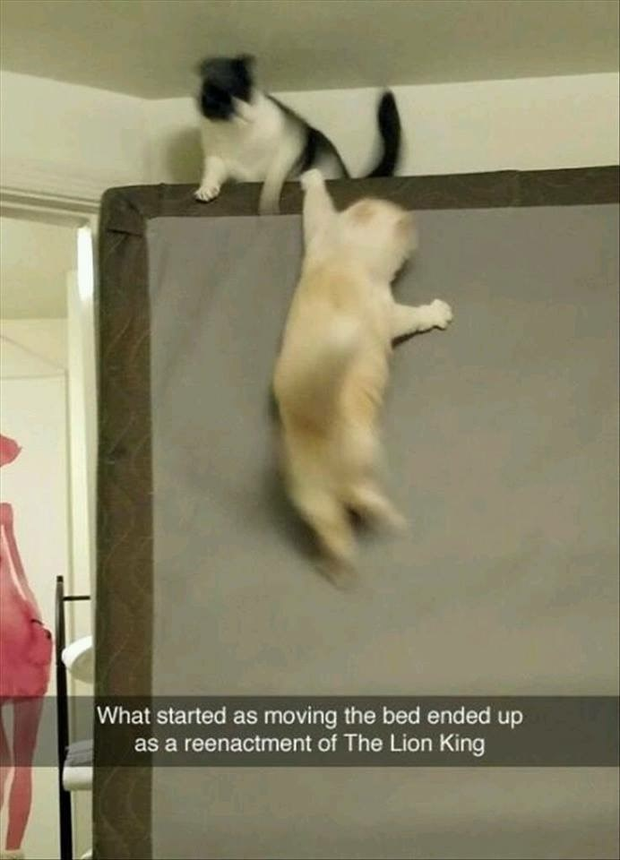 """Meme - """"What started as moving the bed ended up as a reenactment of The Lion King"""""""