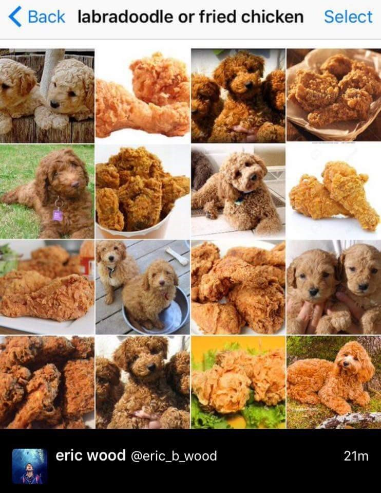 Canidae - Back labradoodle or fried chicken Select eric wood @eric_b_wood 21m