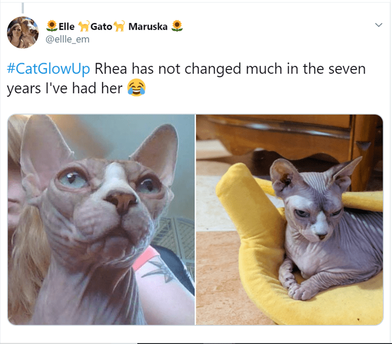 Cat - Gato Maruska Elle @ellle_em #CatGlowUp Rhea has not changed much in the seven years I've had her