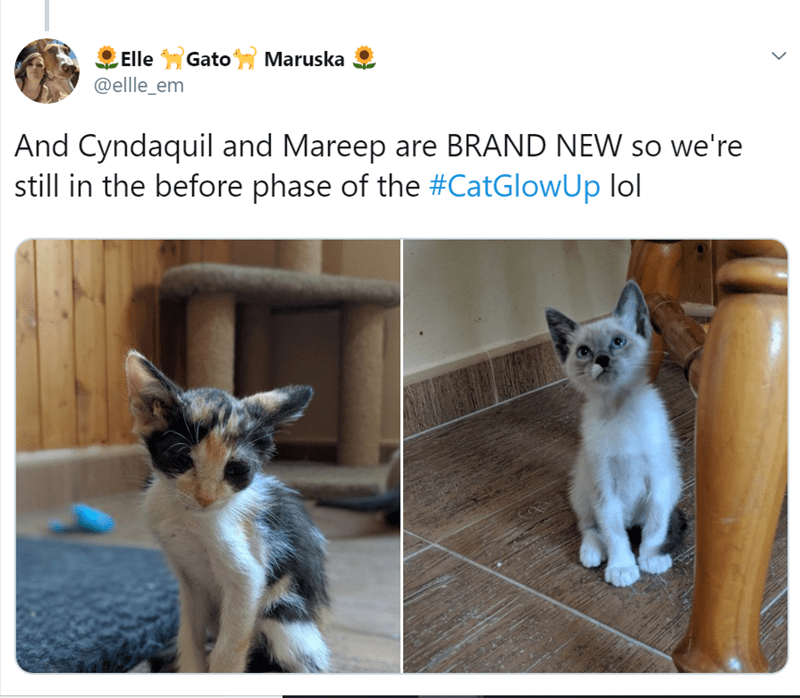 Cat - ,ElleGatoMaruska @ellle_em And Cyndaquil and Mareep are BRAND NEW so we're still in the before phase of the #CatGlowUp lol