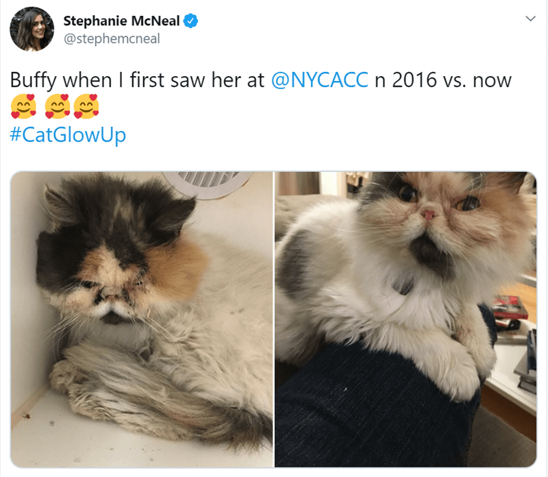 Cat - Stephanie McNeal @stephemcneal Buffy when I first saw her at @NYCACC n 2016 vs. now #CatGlowUp