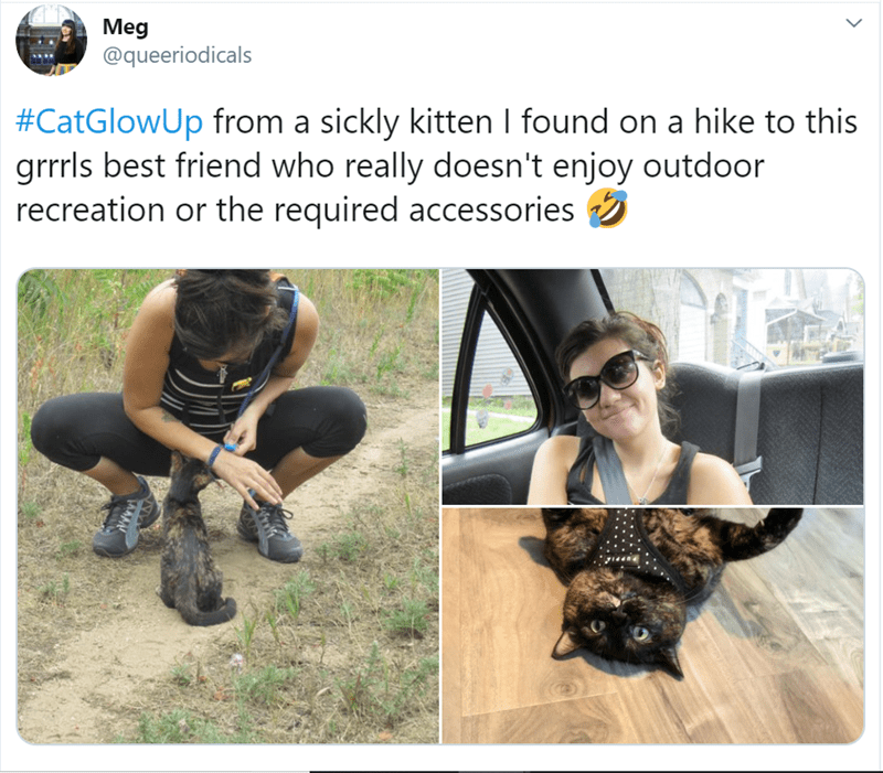 Dog - Meg @queeriodicals #CatGlowUp from a sickly kitten I found on a hike to this grrrls best friend who really doesn't enjoy outdoor recreation or the required accessories