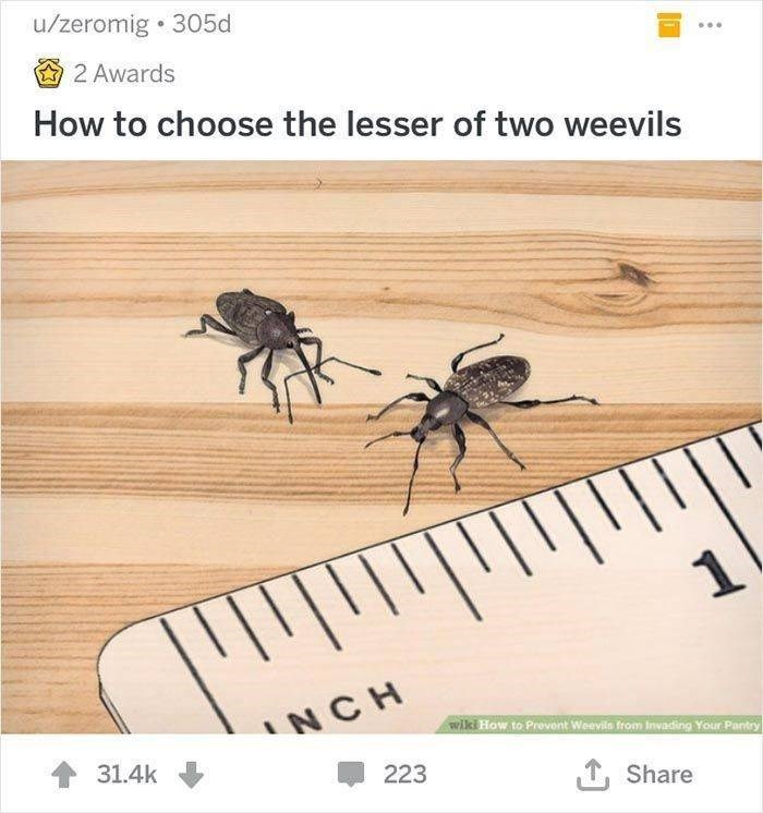 wikihow - Insect - u/zeromig 305d 2 Awards How to choose the lesser of two weevils NCH wiki How to Prevent Weevils from Invading Your Pantry 31.4k 223 ,Share
