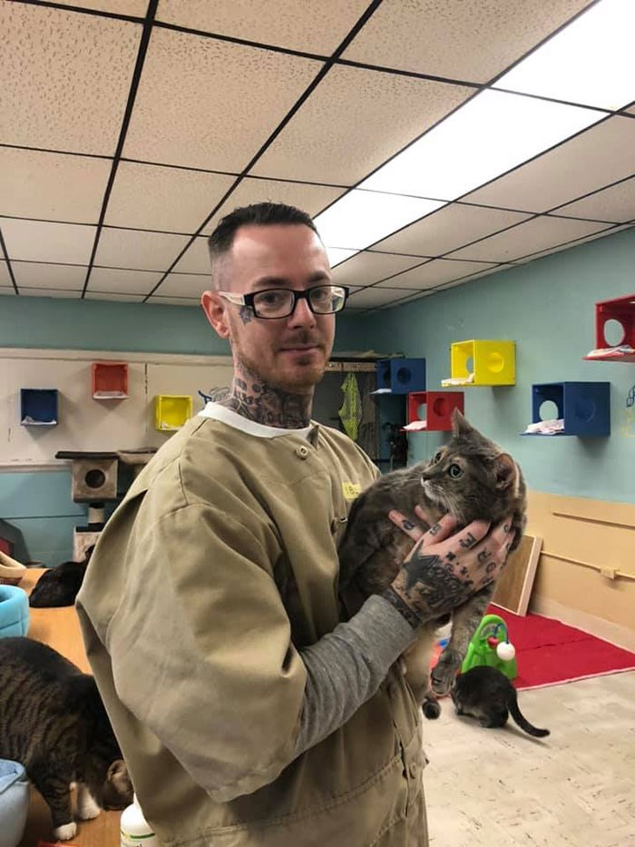 prison cats - Room