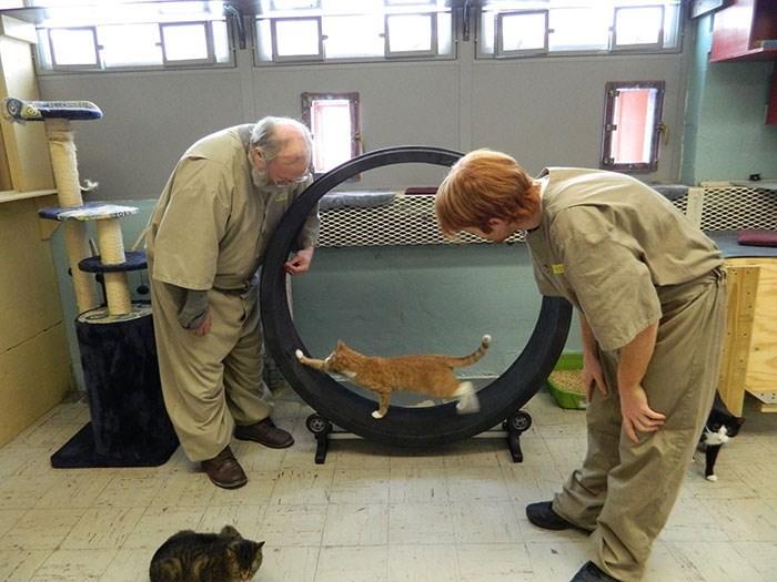 prison cats
