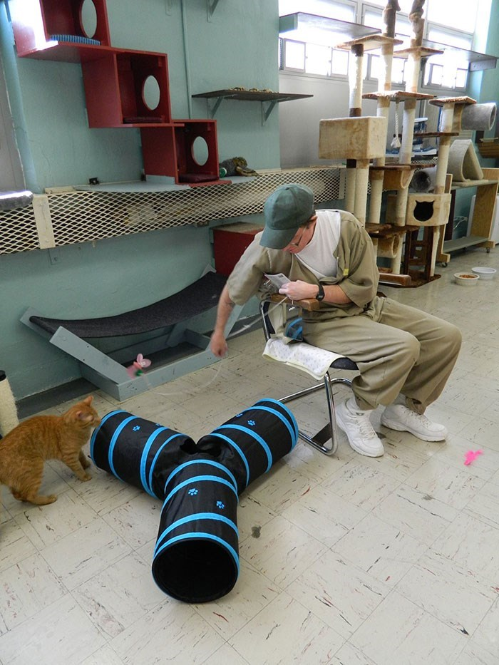 prison cats - Floor
