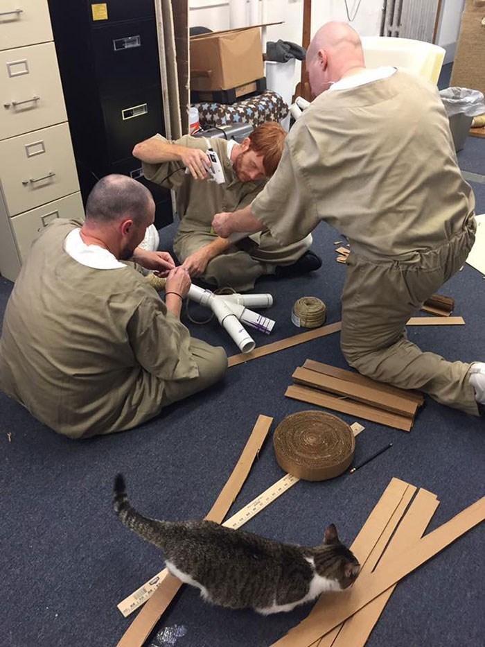 prison cats - Training