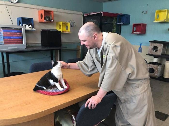 prison cats - Boston terrier