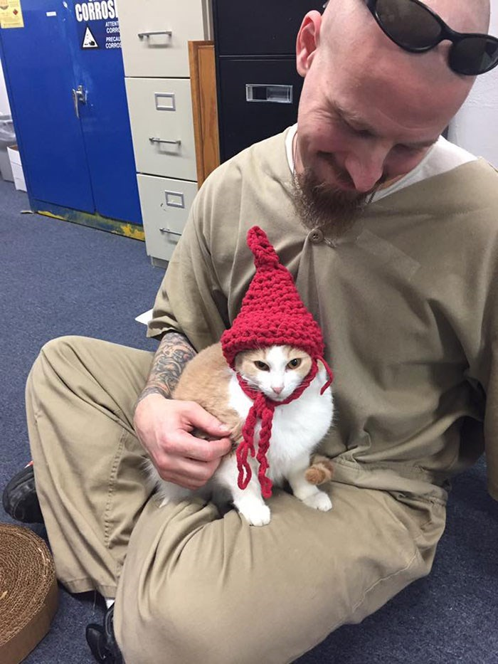 prison cats - Headgear - CORROS ATTENT CORR PRECAL CORROS A