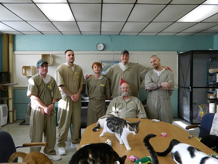 prison cats - Canidae