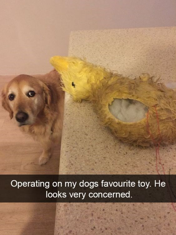 Dog - Operating on my dogs favourite toy. He looks very concerned
