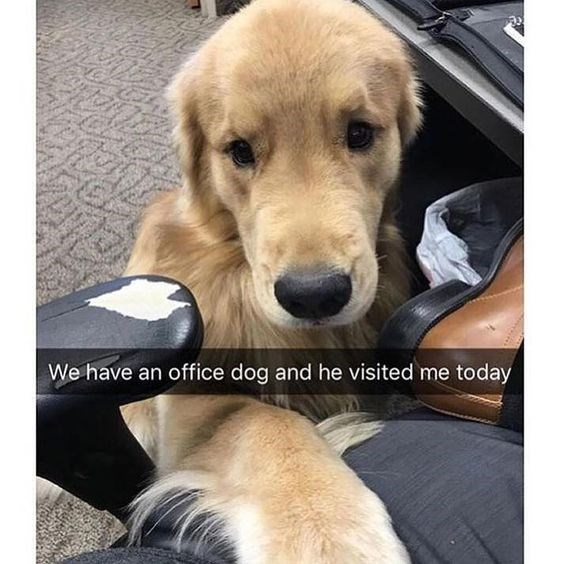 Dog - We have an office dog and he visited me today