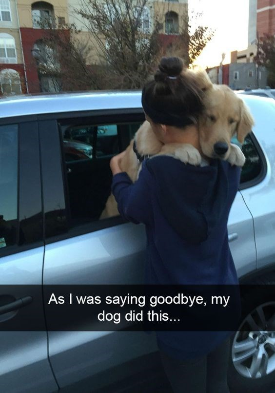 Dog - As I was saying goodbye, my dog did this...